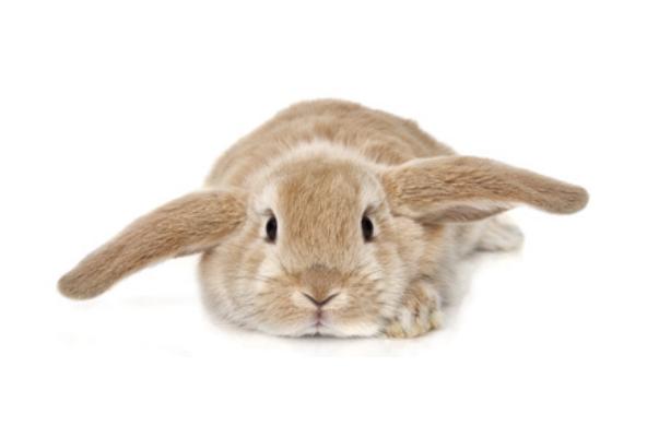 nie bądź królikiem